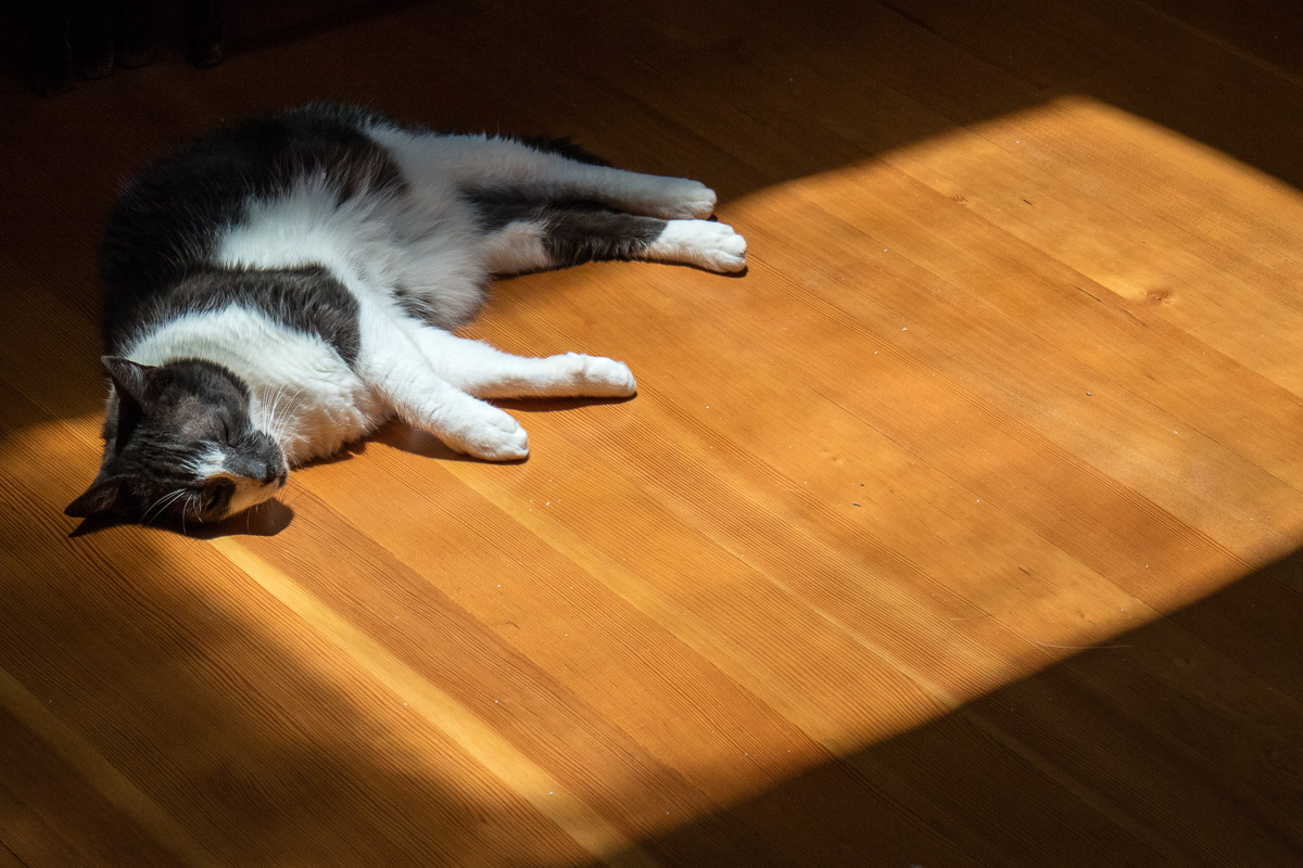 Annie in the sun