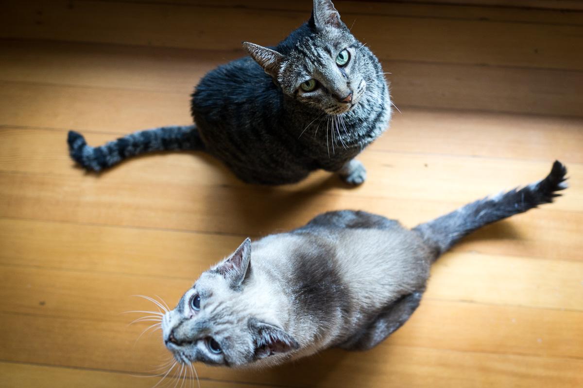 Romeo & Duke